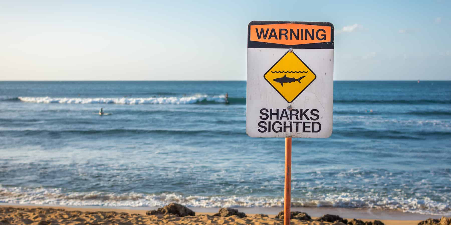 Electricity watchouts sharks sighted